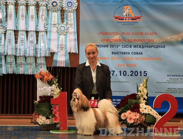 Международная выставка собак CACIB - FCI, Грузия - Тбилиси